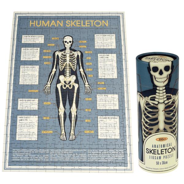 anatomical-skeleton-puzzle-tube-28202